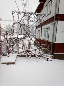 Pensiunea Casa Rodica, Гостевые дома  Гура-Гуморулуй - big - 70