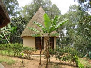 Itambira Island, Seeds of Hope