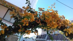 obrázek - Kardamena Holiday Apartments