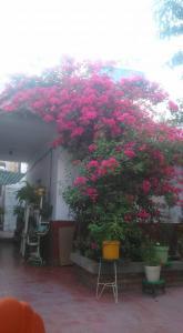 obrázek - Casa Huespedes Lolita