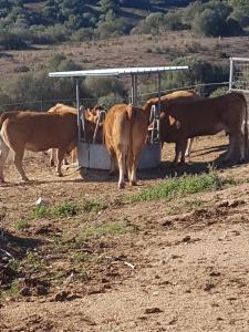 Agriturismo Candela, Agriturismi  Arzachena - big - 15