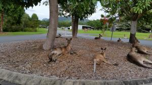 Wildlife Reserve, Ferienhöfe  Gold Coast - big - 5
