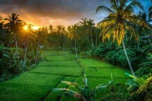 obrázek - Villa Shanti Padma Ubud