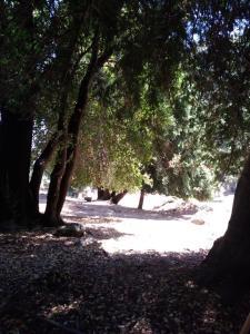 A Picture of Cabañas El Toro Radal Siete Tazas