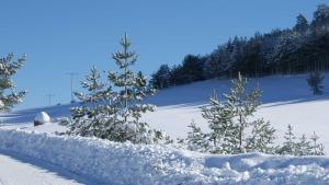 Previja Zlatibor Chalet, Chalet  Zlatibor - big - 34