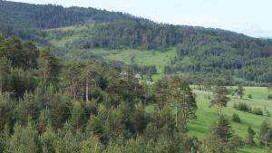 Previja Zlatibor Chalet, Chalet  Zlatibor - big - 46
