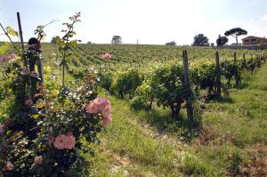 Azienda Agricola Buon Riposo, Vidiecke domy  San Giovanni a Corazzano  - big - 12
