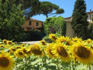 Azienda Agricola Buon Riposo, Vidiecke domy  San Giovanni a Corazzano  - big - 49