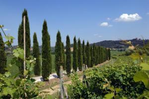 Azienda Agricola Buon Riposo, Vidiecke domy  San Giovanni a Corazzano  - big - 8