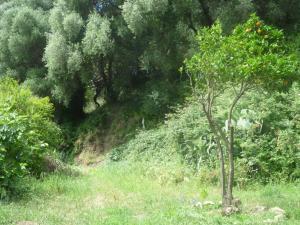 Camino del Castillo