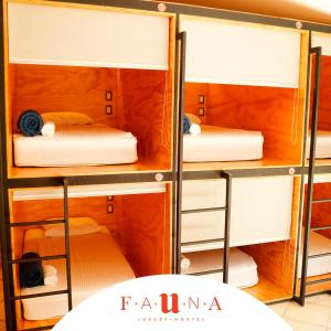 Сан-Хосе - Fauna Luxury Hostel