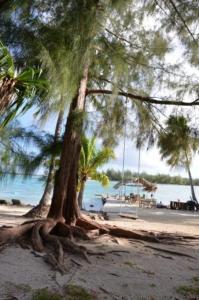 Blue Heaven Island, Lodges  Bora Bora - big - 38