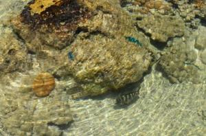 Blue Heaven Island, Lodges  Bora Bora - big - 27