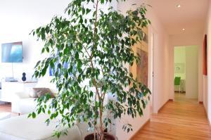 Apartment Moderna - Locarno