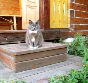 Гостевой дом Конный двор - фото 27