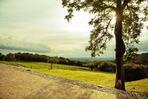 Agriturismo l'Uva e le Stelle, Farmházak  Faedis - big - 23