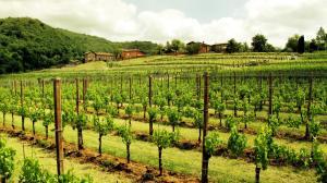Agriturismo l'Uva e le Stelle, Farmházak  Faedis - big - 36