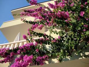 Apartments Villa Cizmic