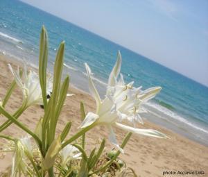 obrázek - Villa Fiori Beach