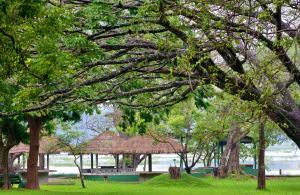 Habarana Village by Cinnamon, Üdülőközpontok  Habarana - big - 15