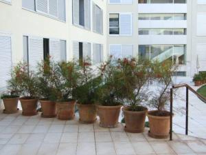 Apartamentos Las Arcadias II, Apartmanok  Palma de Mallorca - big - 11