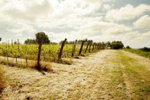 Agriturismo l'Uva e le Stelle, Farmházak  Faedis - big - 43