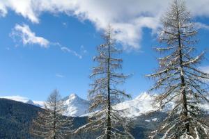 Chesa La Furia, Ferienwohnungen  Pontresina - big - 3