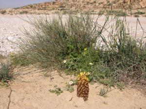 A Picture of Hadass Desert Inn