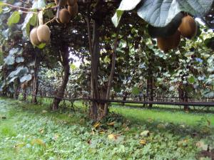 Agriturismo Sant' Anna, Фермерские дома  Тревизо - big - 15