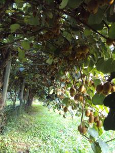 Agriturismo Sant' Anna, Фермерские дома  Тревизо - big - 16