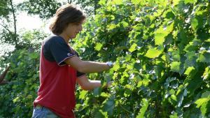 Tenuta Le Sorgive Agriturismo, Bauernhöfe  Solferino - big - 63