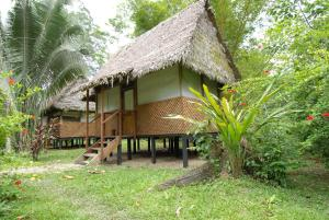 Hotel cerca : Manu Wildlife Center