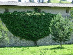 Pensiunea Casa Rodica, Гостевые дома  Гура-Гуморулуй - big - 42
