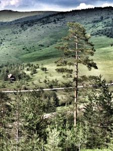 Previja Zlatibor Chalet, Chalet  Zlatibor - big - 50