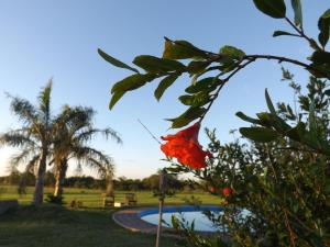 Ipacaa Lodge, Chaty v prírode  Esquina - big - 13
