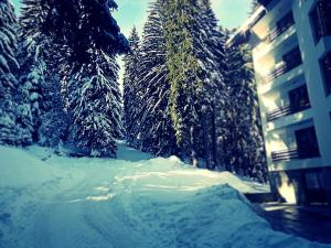 Snowy Dreams Pamporovo Apartments