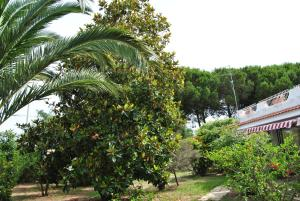 Villa Margherita, Holiday homes  Capo Vaticano - big - 24