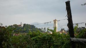 Il Bosco dei Ciliegi