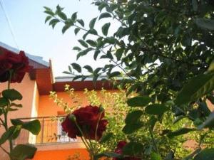 obrázek - Lary Hostel