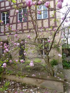 Appartement La Cour Finkwiller - Apartment - Strasbourg