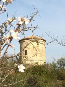 Chateau Pech-Céleyran, Bed & Breakfasts  Salles-d'Aude - big - 28