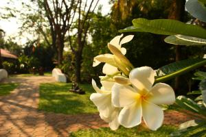 Secret Garden Chiangmai, Hotels  San Kamphaeng - big - 57
