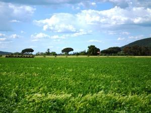 Tenuta Agricola dell'Uccellina, Bauernhöfe  Fonteblanda - big - 128