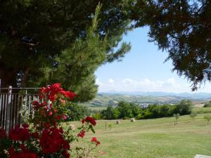 Leondina Country House, Bed & Breakfasts  Corinaldo - big - 12