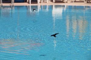 Apart Hotel Ege, Penziony  Ayvalık - big - 39
