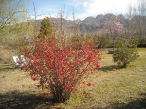 Cabañas Rio Mendoza, Chaty v prírode  Cacheuta - big - 18