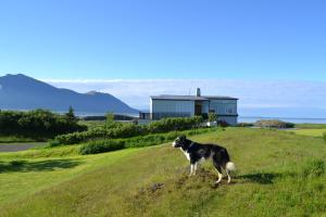 Raufarnes Holiday Home