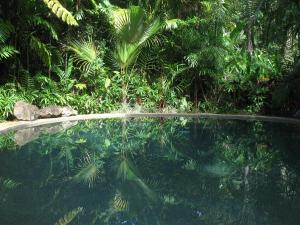Daintree Rainforest Retreat Motel - Far North Queensland, Queensland, Australia