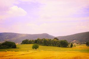 Casa Di Campagna In Toscana, Загородные дома  Совичилле - big - 83