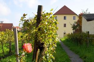 ad vineas Gästehaus Nikolaihof-Hotel Garni, Hotel  Mautern - big - 31